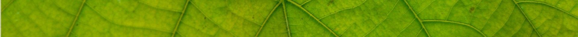 leaf-1618330_1920